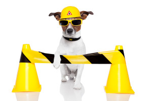 canstockphoto12290189-under_construction_dog