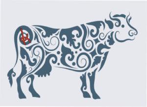 canstockphoto11443547-branding-cow-webres